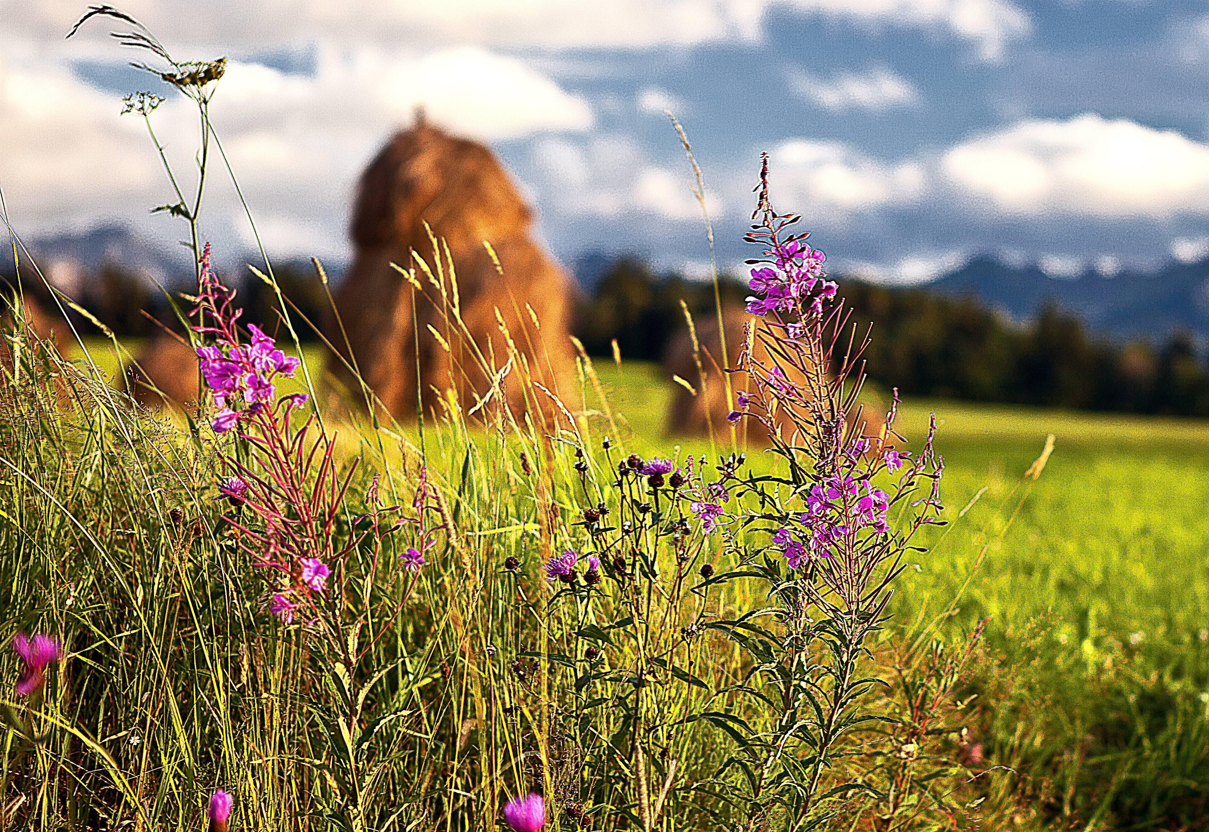 Ярткины — полевые фейри, дарующие хороший урожай