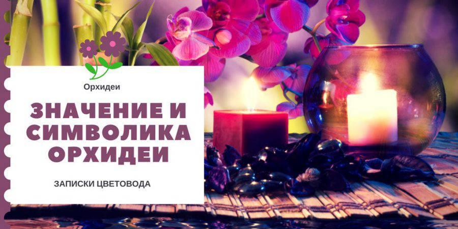 Значение орхидеи: как подарка и домашнего растения