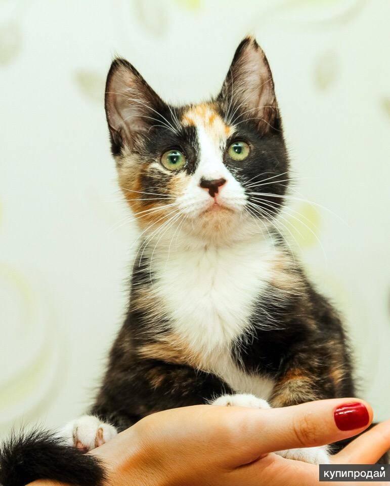 Кошка в доме приметы к добру или худу?