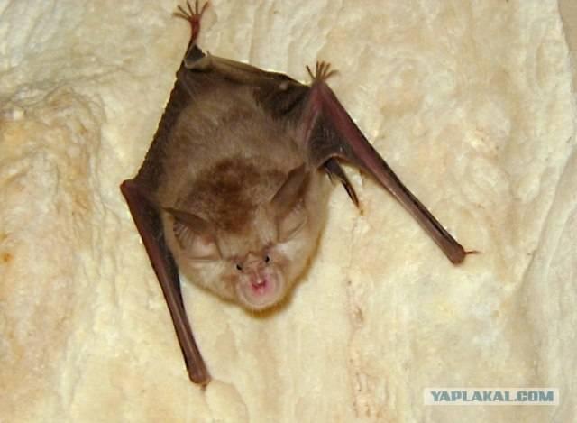Летучая мышь залетела в дом: приметы