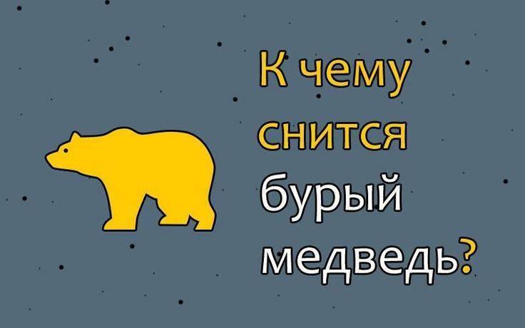 Сонник бурый медведь к чему снится женщине