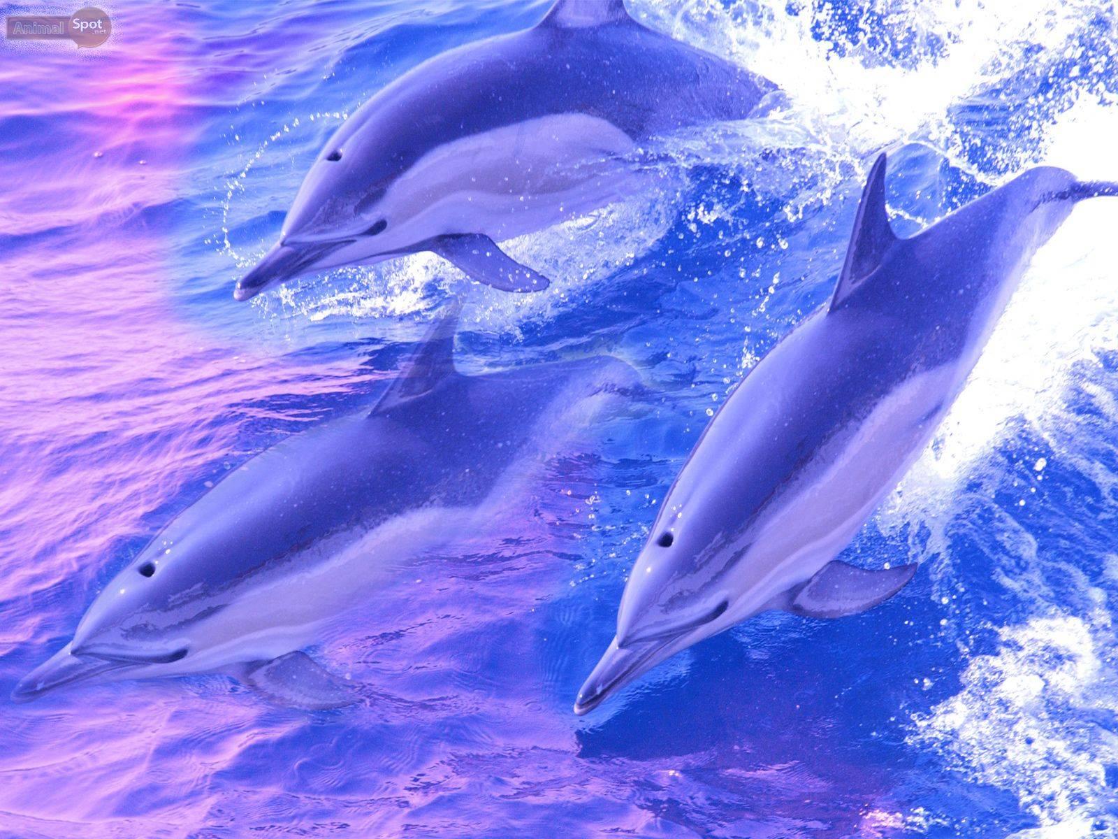 К чему снятся дельфины - значение сна дельфин по соннику