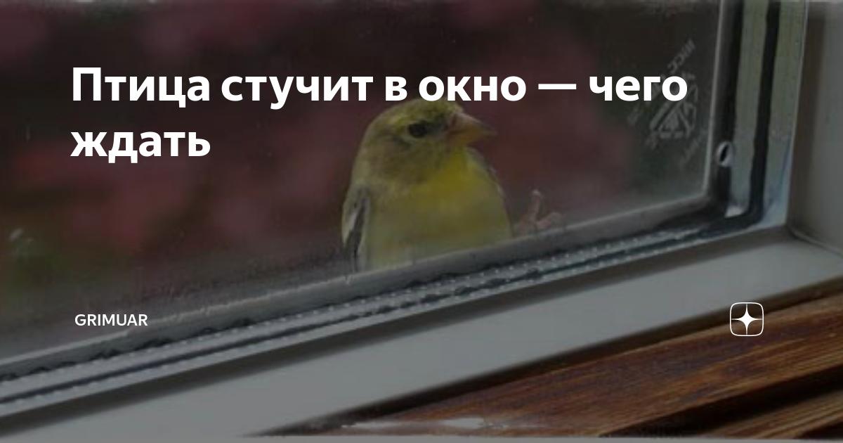 Птичка стучит в дверь. к чему стучится птица в окно? узнаем