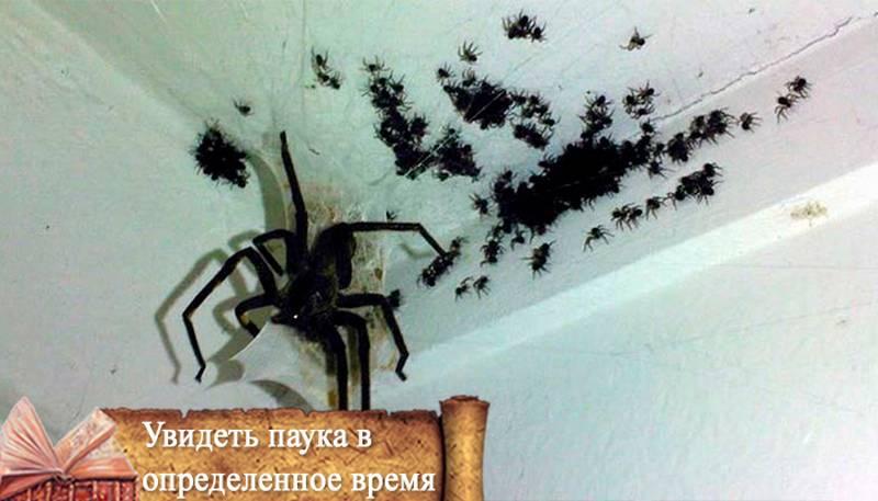 Примета: паук спускается вниз по паутине или ползет вверх по стене
