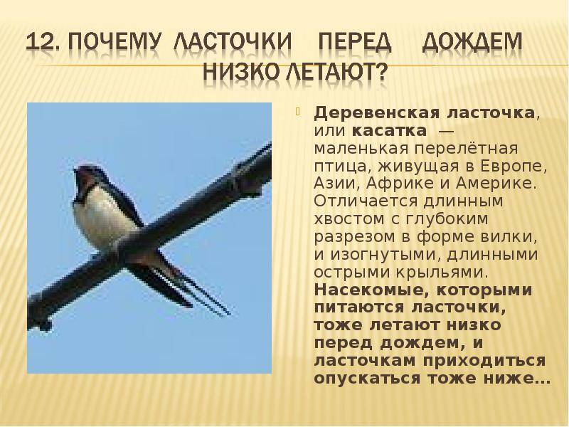 Приметы про ласточек - залетела в окно и на балкон, гнездо птицы и прочие поверья