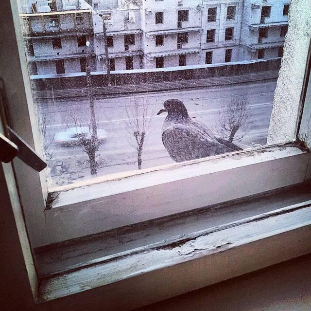Что означает, если голубь залетел в окно