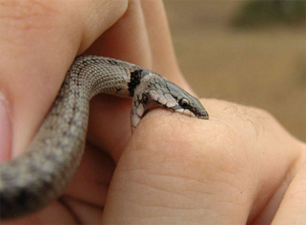 Сонник змея укусила другого. к чему снится змея укусила другого видеть во сне - сонник дома солнца