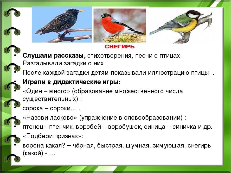 10 примет о птицах, предвещающих беду :: инфониак
