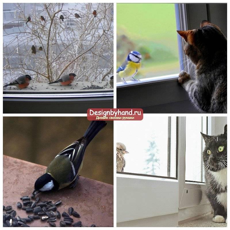 Актуальные приметы о прилете в дом птицы