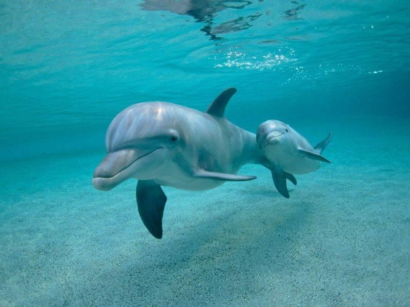 Лед и дельфины