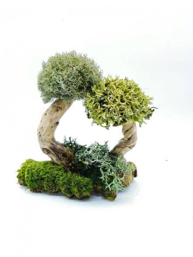 Магические деревья и их свойства