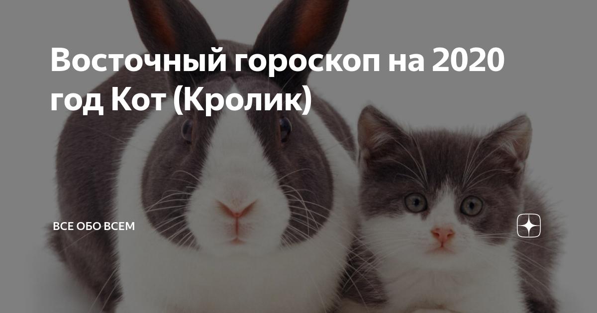 Гороскоп для кролика (кота) на 2021 год