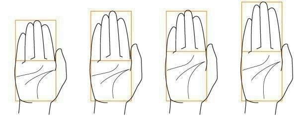 Психотипы  по  форме   руки