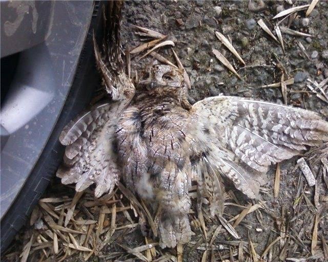 Добрый ли знак, если птица накакала на голову или иное место? особенности приметы