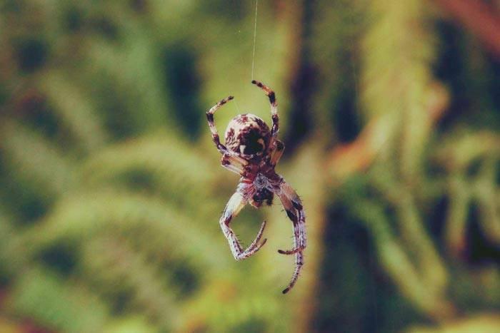 Приметы о пауках в доме: хорошо или плохо увидеть белого или черного арахнида