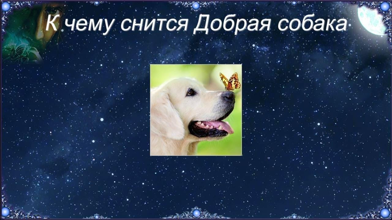 Сонник собака на цепи кусает. к чему снится собака на цепи кусает видеть во сне - сонник дома солнца