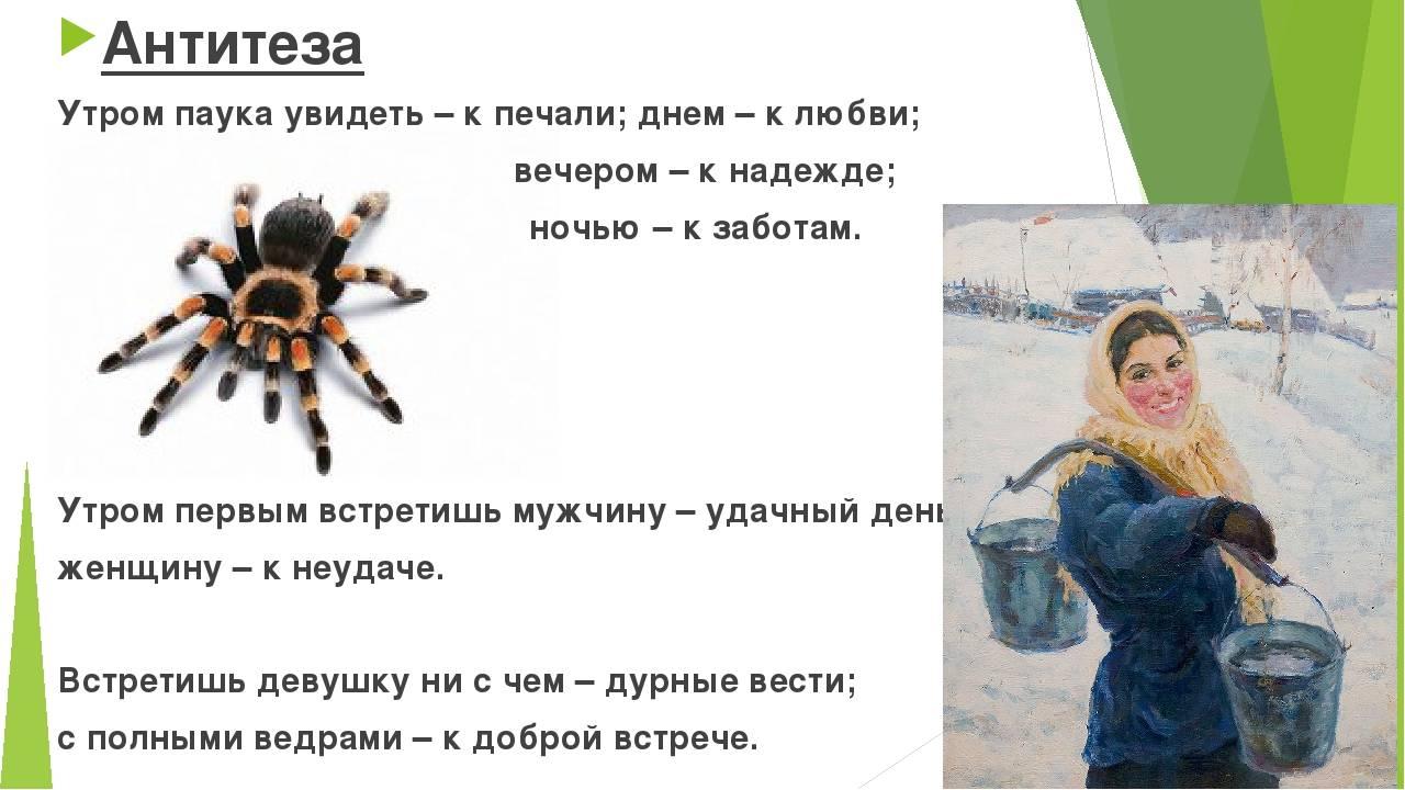Человек и паук. приметы, связанные с пауками
