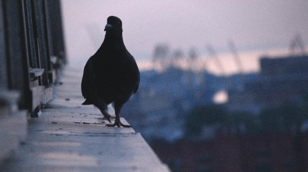 Примета, если птица ударилась в окно и улетела
