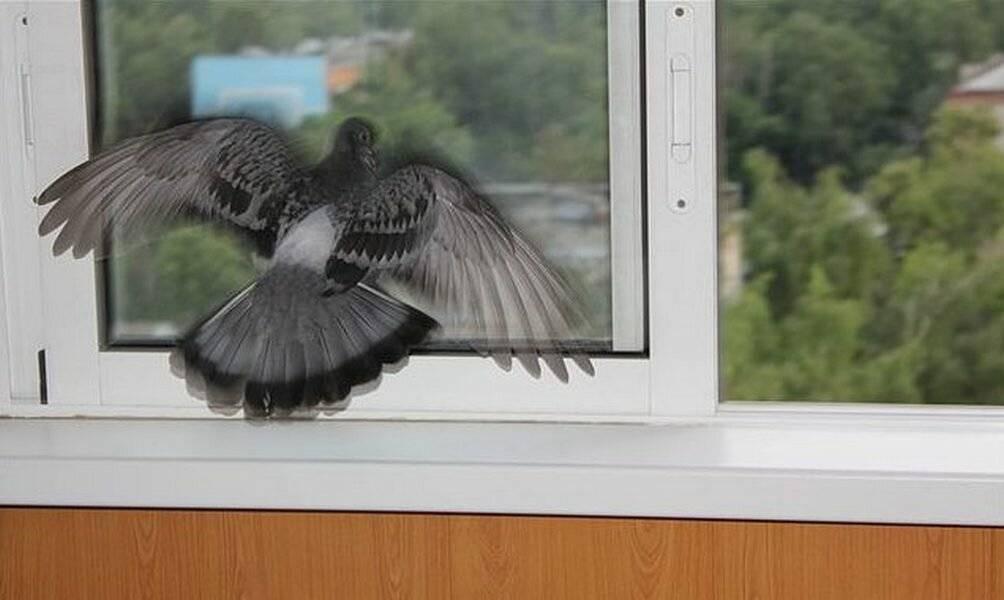 Птица врезалась в окно и упала