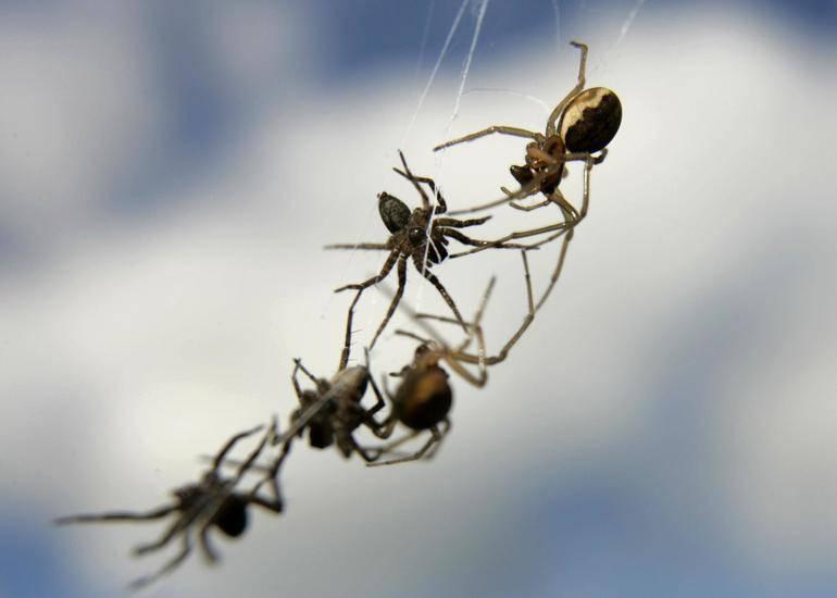 Сонник много маленьких пауков. к чему снится много маленьких пауков видеть во сне - сонник дома солнца