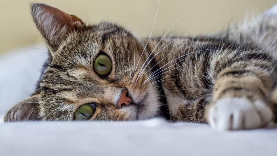 Приметы про котят - подобрать с улицы, если подкинули, какого цвета?