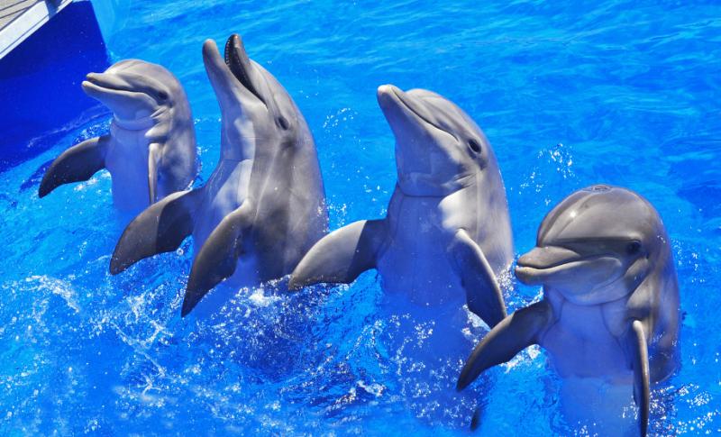 К чему снятся дельфины. сонники про дельфинов во сне женщины