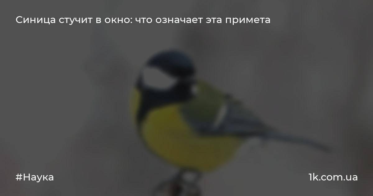 Примета птица стучит в окно - что это значит и что делать в такой ситуации