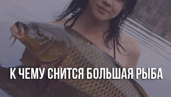 Сонник большая рыба в реке. к чему снится большая рыба в реке видеть во сне - сонник дома солнца