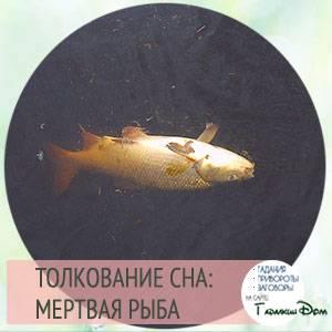 Сонник рыба в крови мертвая. к чему снится рыба в крови мертвая видеть во сне - сонник дома солнца