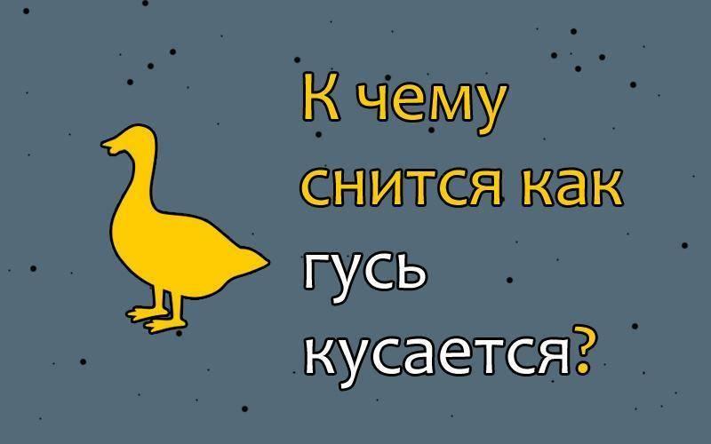 Приснились гуси – к неожиданному богатству или к несчастьям?