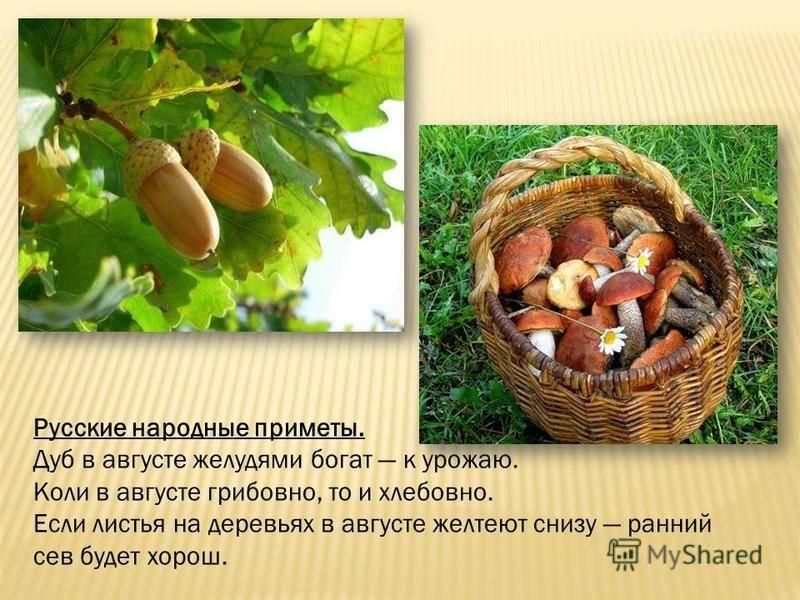 Русские народные зимние приметы на урожай