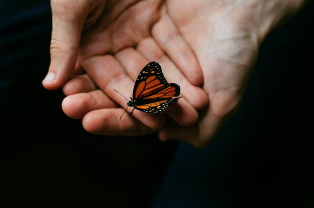 О чем говорит примета, если бабочка залетела в окно? о чем говорит примета, если бабочка залетела в окно?
