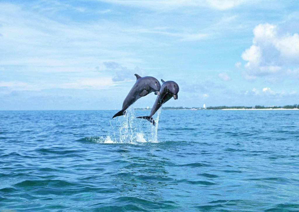 К чему снятся дельфины (сонник)