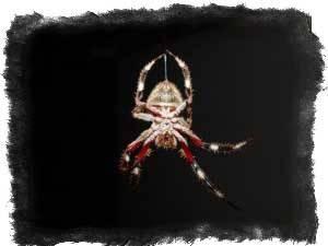 Примета — паук спускается вниз, значение и толкования