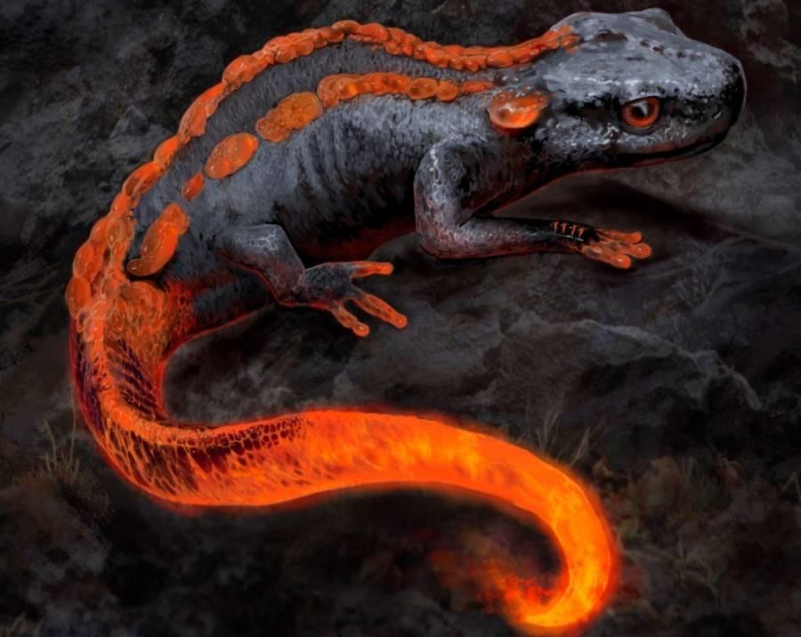 Огненная саламандра. непознанное, отвергнутое или сокрытое