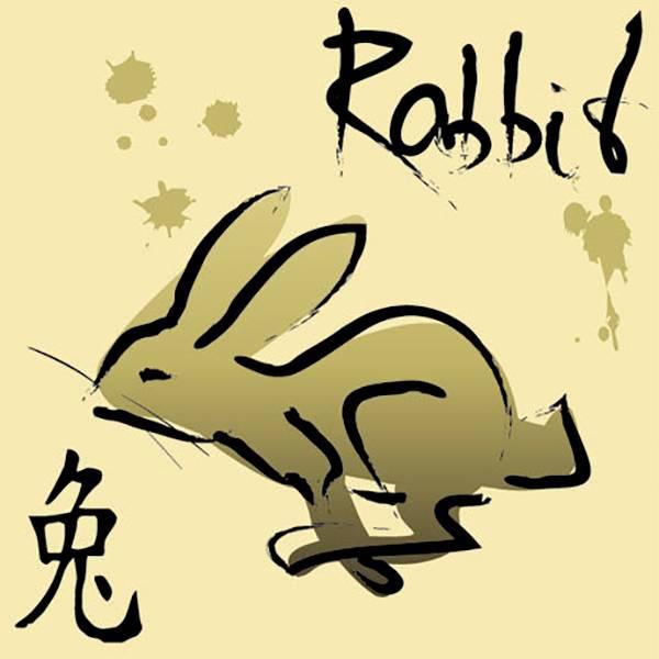 Мужчинакот (кролик)