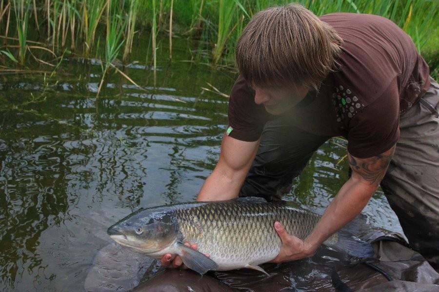 Сонник рыбу ловить. к чему снится рыбу ловить видеть во сне - сонник дома солнца