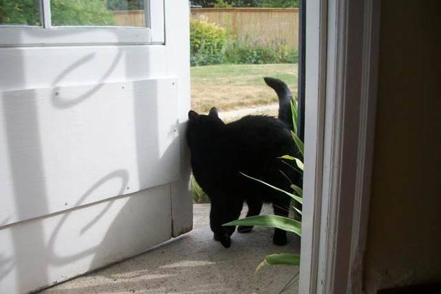 Черный кот в доме: приметы, хорошо или плохо, если приблудился или забежал