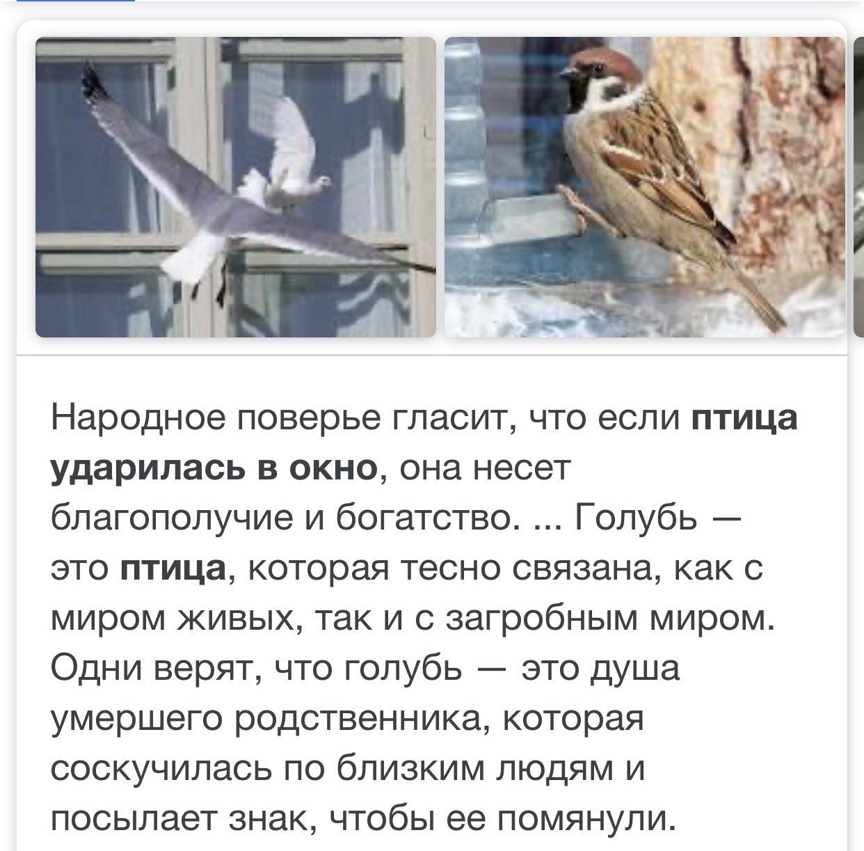 Примета: воробей ударился в окно и улетел, врезался в стекло и разбился – к чему это