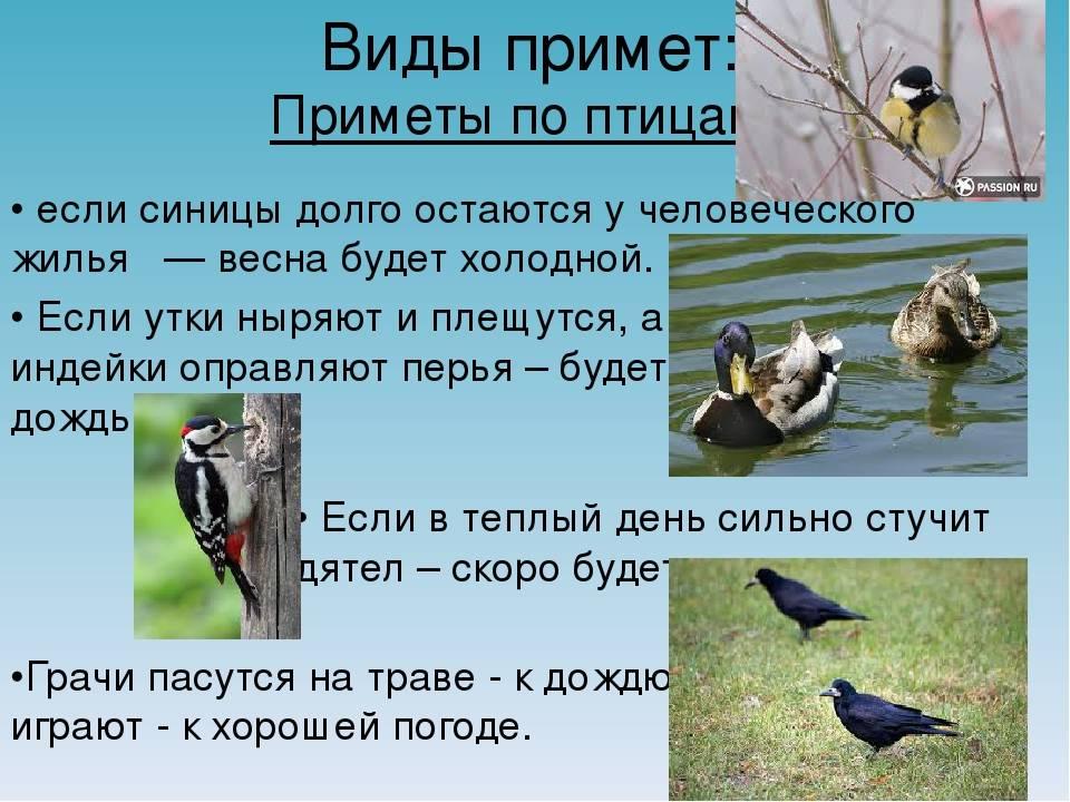 Все приметы про птиц