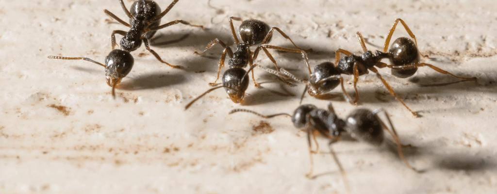 Приметы о муравьях в доме - дом солнца