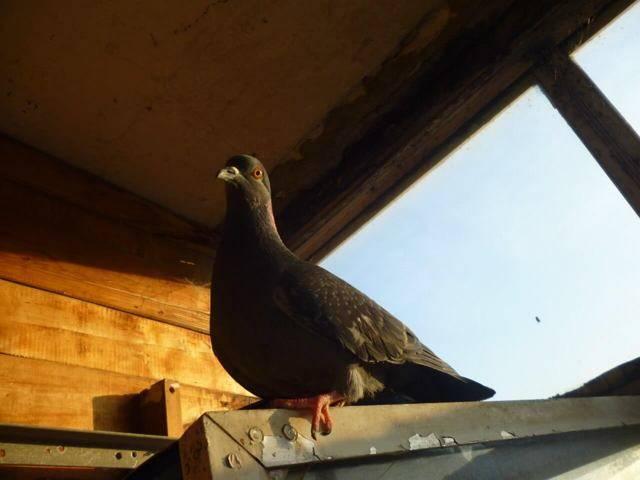 Воробей залетел в дом через окно: примета - что делать с птицей?