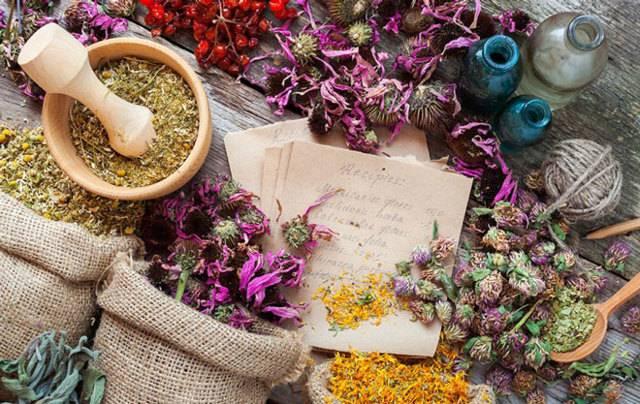 Комнатные растения — обереги энергии дома и их хозяев