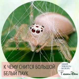 Сонник паук на теле. к чему снится паук на теле видеть во сне - сонник дома солнца