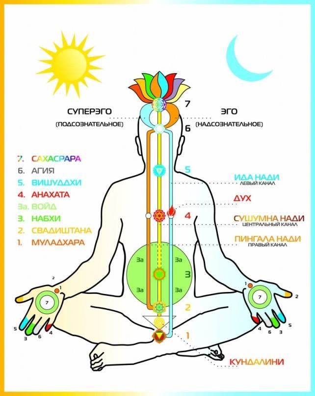 Чакры и их значение.  расположение чакр | smartyoga: йога для здоровья и йогатерапия в москве