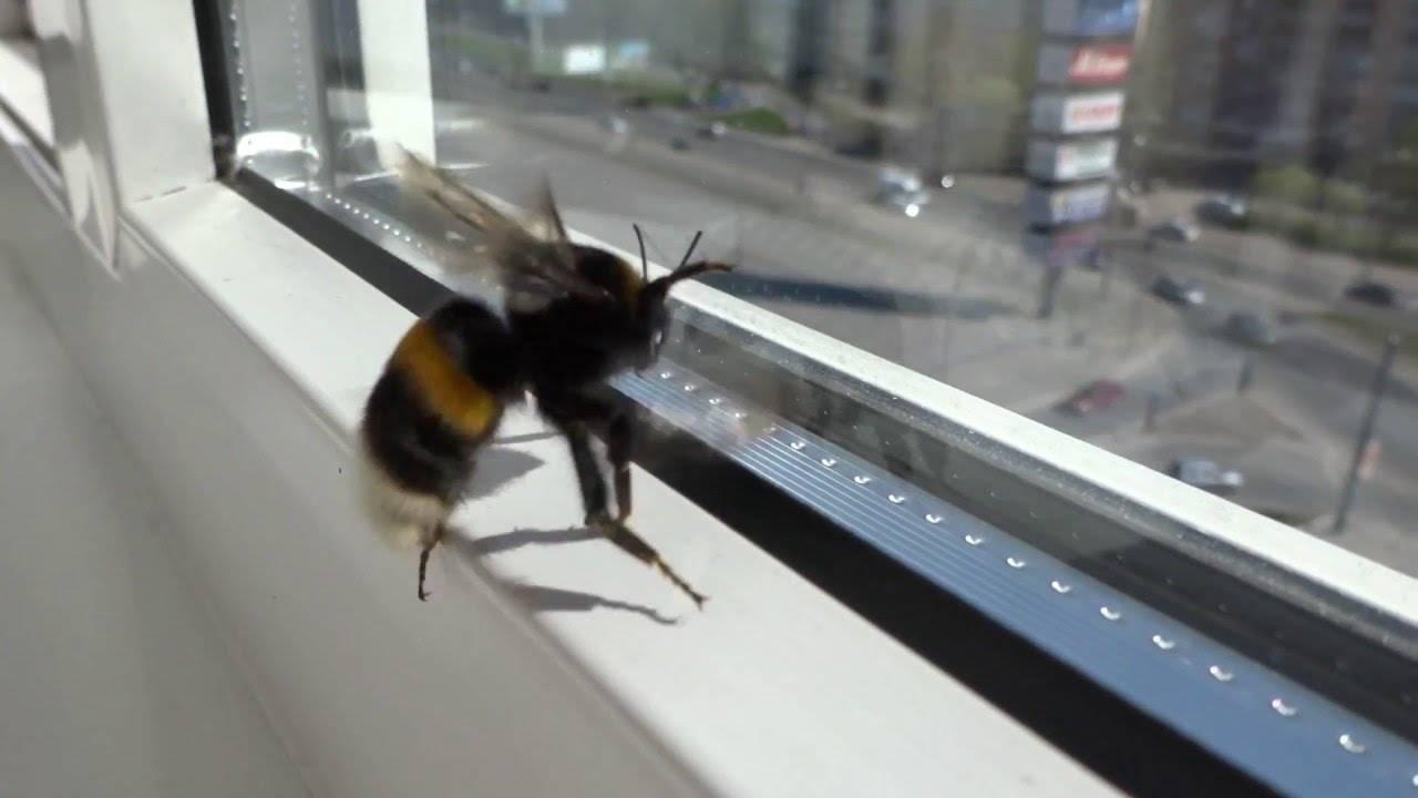Шмель залетел в окно, примета об осах и пчелах