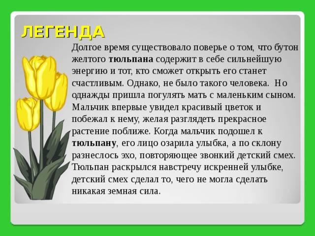 Растения осенних цветников: названия и фото, легенды и поверья. легенды и поверья о весенних цветах разных стран. старинные поверья о цветах — символах весны легенды о цветах весеннего цветника