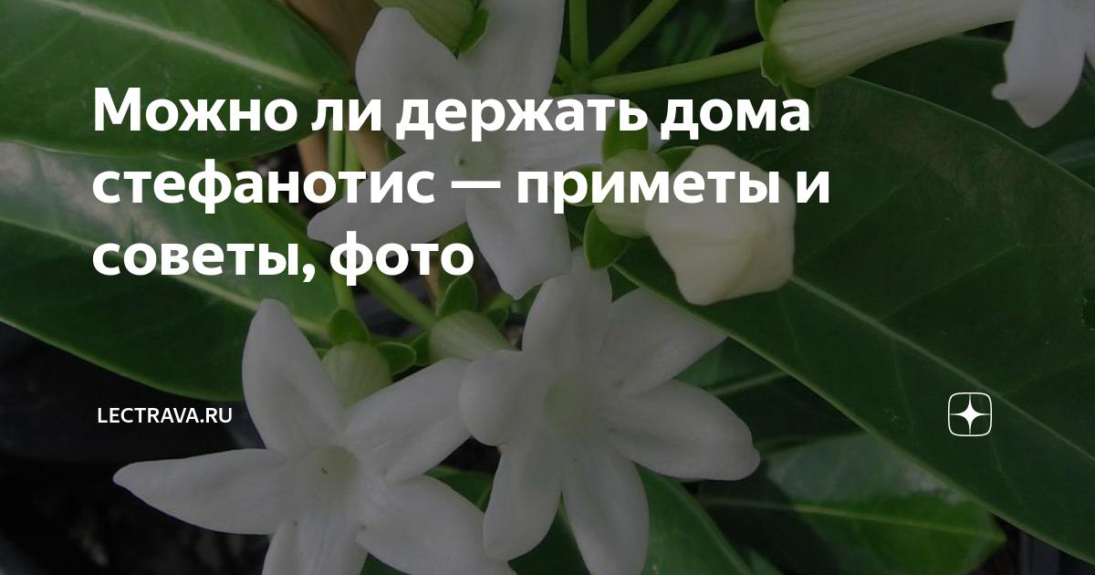 Хатиора — приметы заморского кактуса