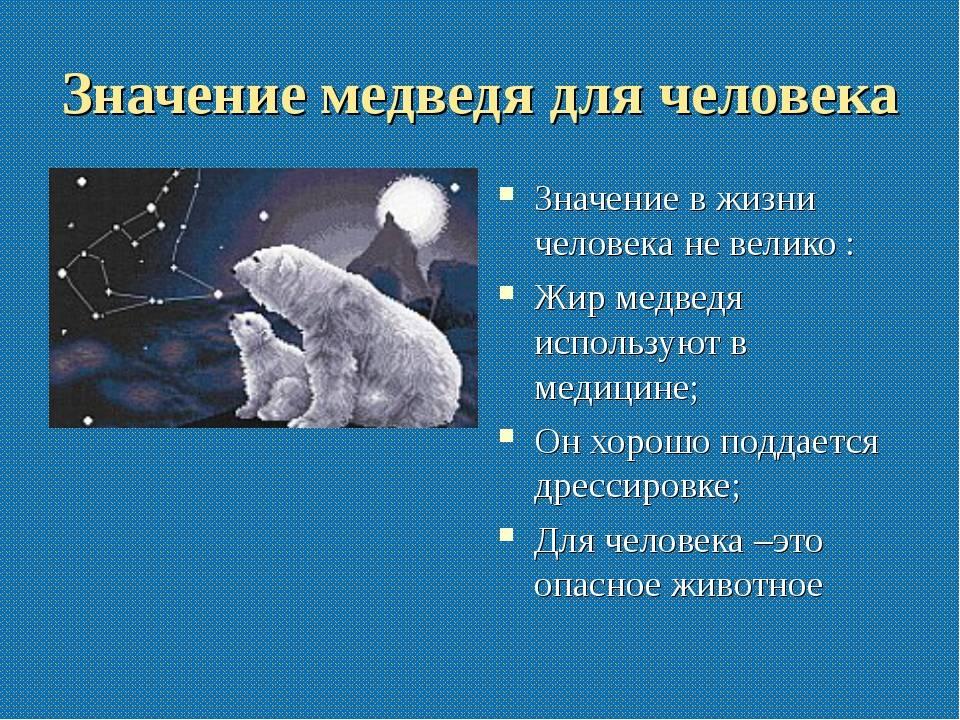 К чему снится медведь: мужчине, женщине, белый медведь во сне.