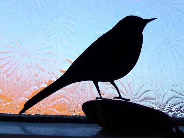 Птица залетела в дом – примета, положительное и негативное значение